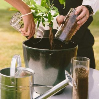 """ONE WITH THE SOIL  We are always in search of new, unique and special ideas for Weddings and we think we found a sweet alternative to the unity candle and sand 🥁 mixing potting soil!   Yes that is correct!   As a symbol of a couple becoming one through marriage you can add two separate vessels of soil to a potted plant and mix it up. Nice thing about this is you then have to also accept the marital challenge of keeping said """"love fern"""" alive which is great practice if you one day would like the responsibility of a pet or child! 😉  Image from Pinterest  #weddingideas #newidea #onewiththesoil #unity #lovefern #weddingplanners #weddingcoordinators #weddingceremony #weddingdecor #weddingflowers #gautengweddings"""